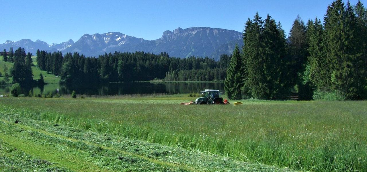 Séchage en grange du fourrage - SGF Conseil : Des prairies équilibrées produisant des foins appétant et d'excellentes qualités